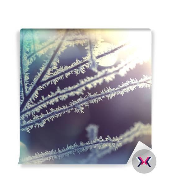 Fototapeta - Mrazivý strom
