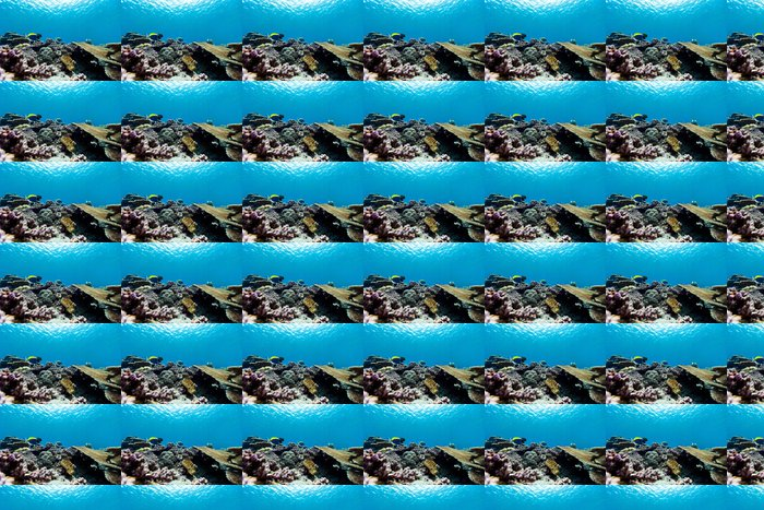 Vinylová Tapeta Korálový útes pod vodou - Podvodní svět