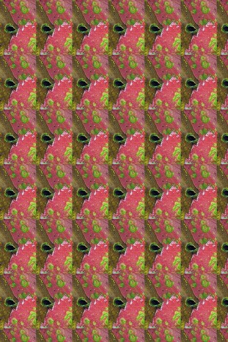 Vinylová Tapeta Podzim v Central Parku - Roční období