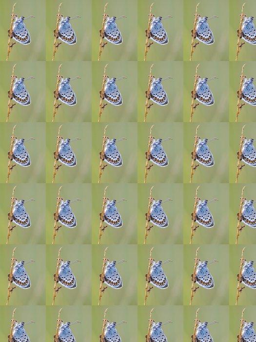 Vinylová Tapeta Modrásek Černolemý Butterfly v symbióze s červeným mravence - Roční období