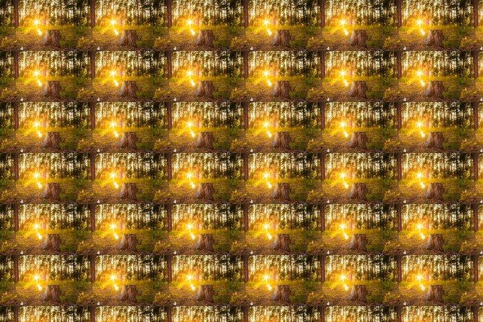 Vinylová Tapeta Západ slunce v podzimním lese - Roční období