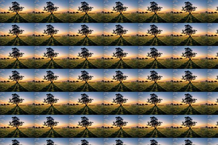Vinylová Tapeta Tree Shadows - Oceánie