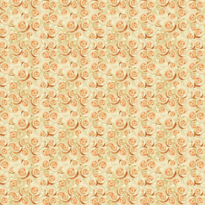 Vinylová Tapeta Bílá růže květiny - Květiny