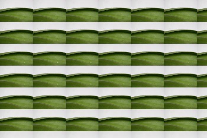 Vinylová Tapeta Mokré listí zvětšovat - Rostliny