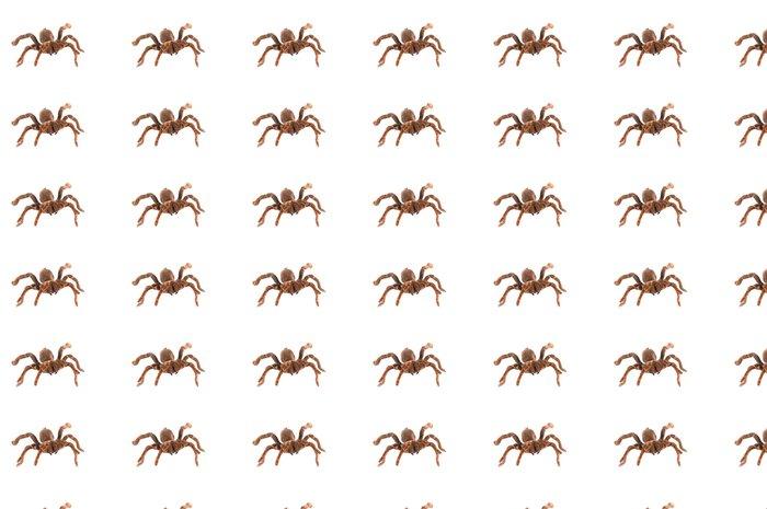 Vinylová Tapeta Král Pavián Tarantula (C. crawshayi) Žena - Jiné pocity