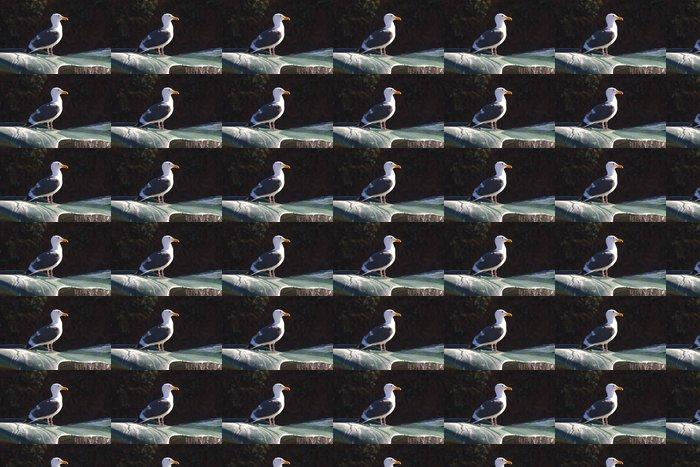 Vinylová Tapeta Racek stříbřitý - Ptáci