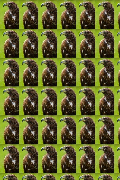 Vinylová Tapeta Golden Eagle close-up - Témata