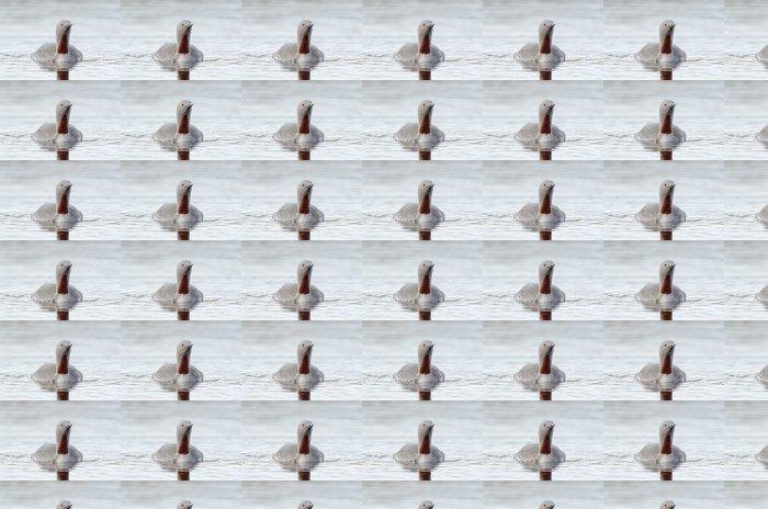 Vinylová Tapeta Sterntaucher, Red-throated potápěč, Gavia stellata - Ptáci