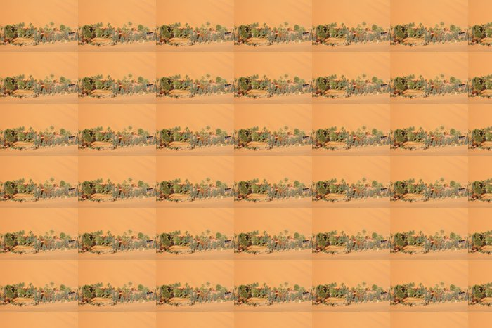 Vinylová Tapeta Oasis v saharské poušti - Pouště
