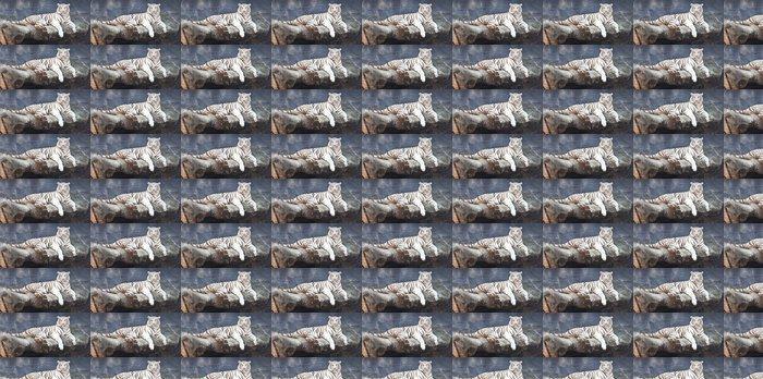 Vinylová Tapeta WHITE TIGER na skále v zoo - Témata
