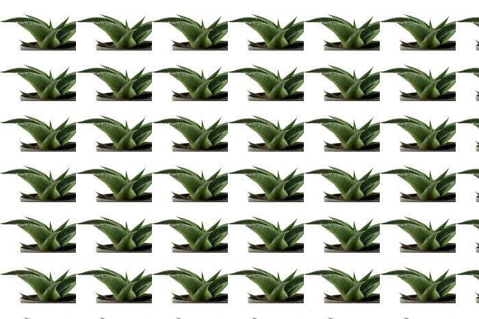 Vinylová Tapeta Aloe vera v hrnci - Rostliny