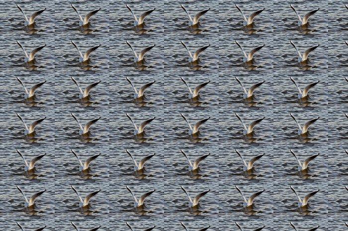 Vinylová Tapeta Potápěč - Ptáci