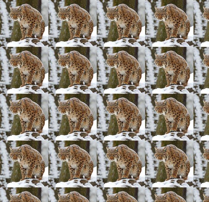 Vinylová Tapeta Zimní Lynx - Savci
