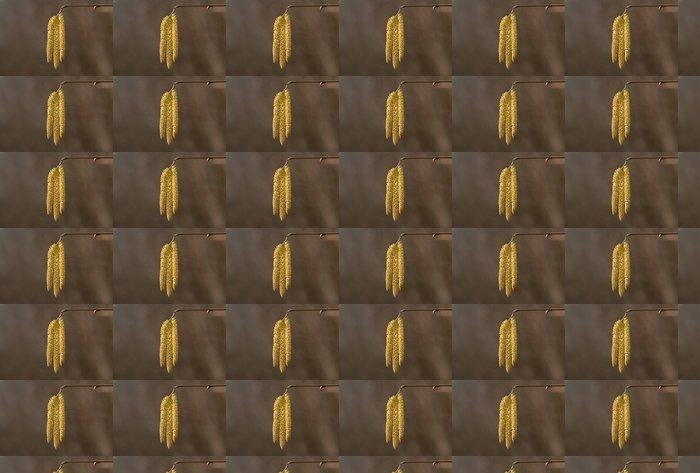 Vinylová Tapeta Hasel, společný líska, Corylus avellana - Roční období