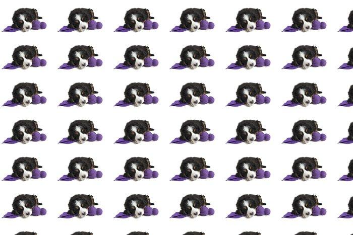 Vinylová Tapeta Mladý Bernský salašnický pes spí na jeho hračka - Savci