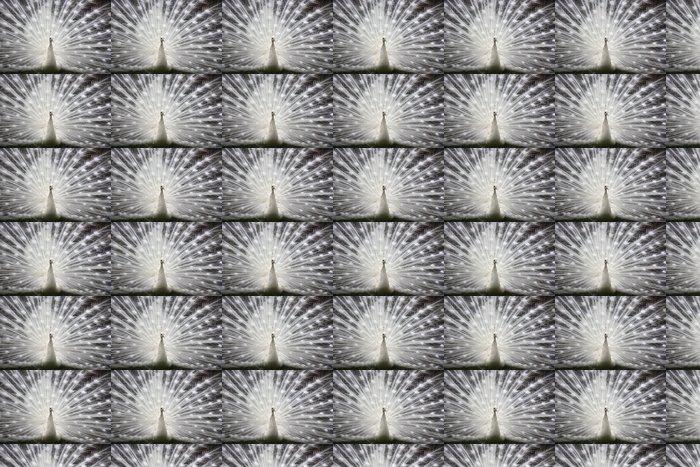 Vinylová Tapeta Bílý páv - Ptáci