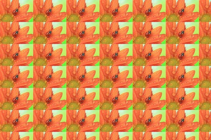 Vinylová Tapeta Krásná beruška na květu, close up - Květiny