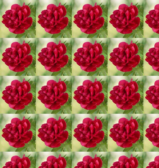 Vinylová Tapeta Krásné růžové pivoňka na zeleném pozadí - Roční období