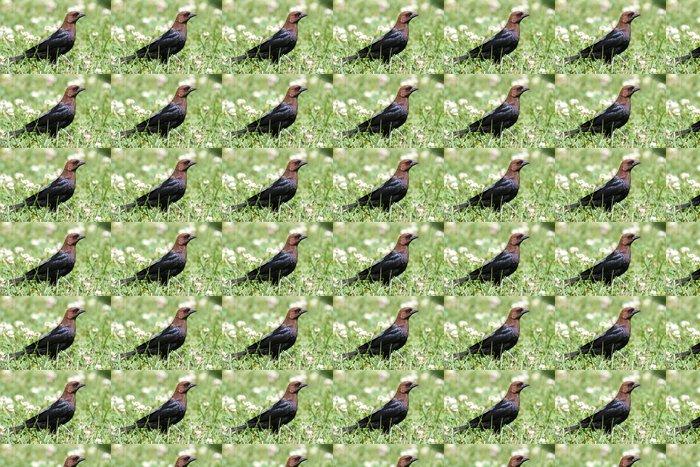 Vinylová Tapeta Cowbird - Ptáci