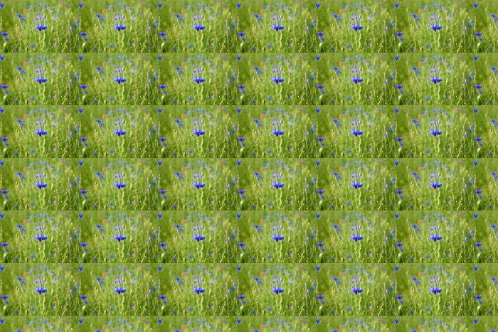Vinylová Tapeta Cornflowers - Chrpy