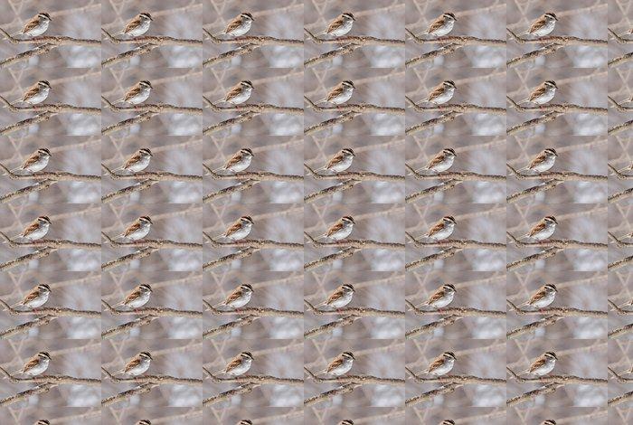 Vinylová Tapeta White-throated Sparrow, Zonotrichia albicollis - Témata