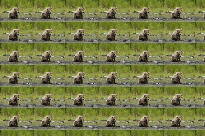Vinylová Tapeta Medvěd hnědý mládě poškrábání jeho hlavu - Témata