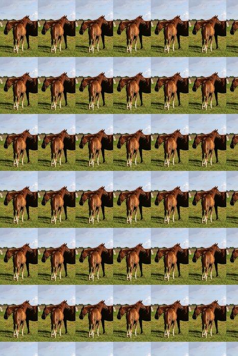 Westfalenstute mit ihrem Fohlen 1 Vinyl Wallpaper - Mammals
