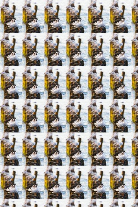Vinylová Tapeta Rackové na groynes v příboji na polském pobřeží Baltského moře - Ptáci
