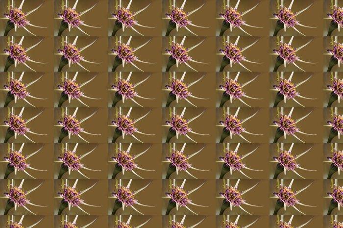 Vinylová Tapeta Barba cabruna (Tragopogon porrifolius) - Květiny