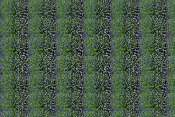 Vinylová Tapeta Lavender Bush - Květiny