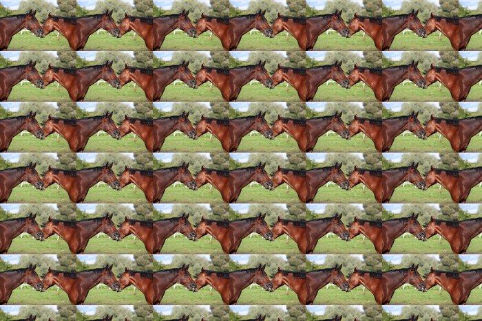 Vinylová Tapeta Dva koně hrají mezi sebou navzájem - Savci