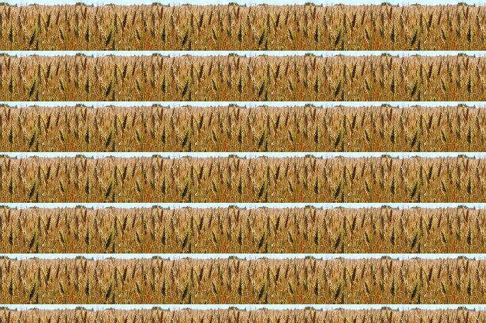 Vinylová Tapeta Klas kukuřice - Roční období