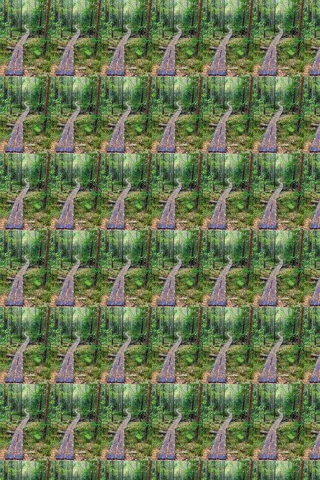 Vinylová Tapeta Chodník v lese - Roční období