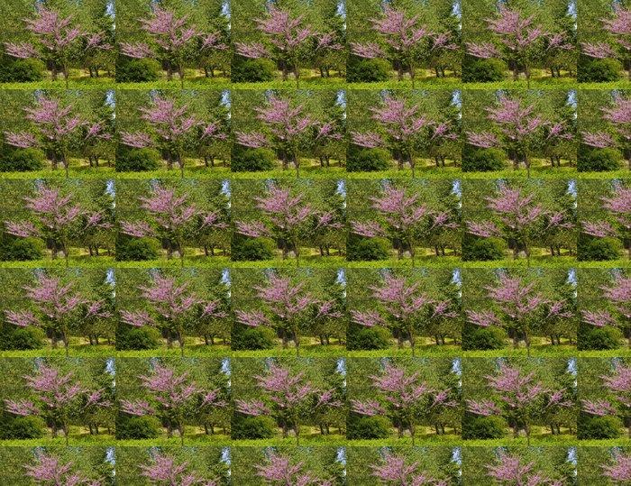 Vinylová Tapeta Japonská třešeň v květu - Roční období