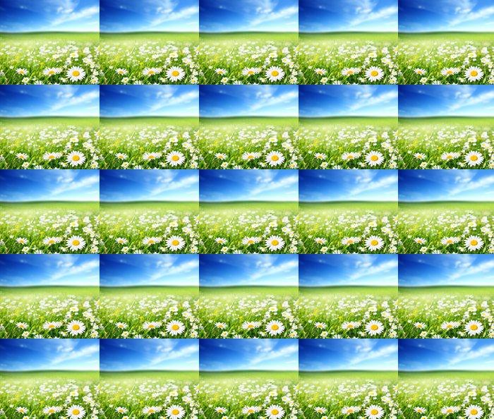 Vinylová Tapeta Pole květy sedmikrásky - Květiny
