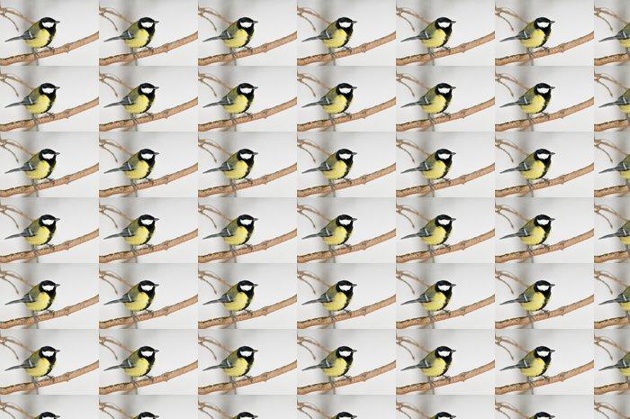 Vinylová Tapeta Sýkora koňadra na zasněžené pozadí - Ptáci