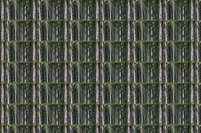 Vinylová Tapeta Naturbelassener Wald - Lesy