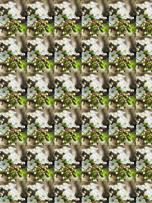 Vinylová Tapeta Bílé květy kvetoucí třešeň těsné u - Stromy