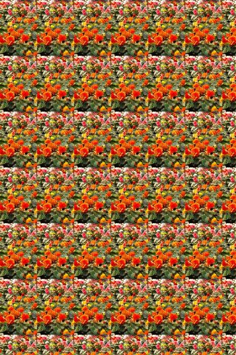 Vinylová Tapeta Tuberos begónie - Květiny