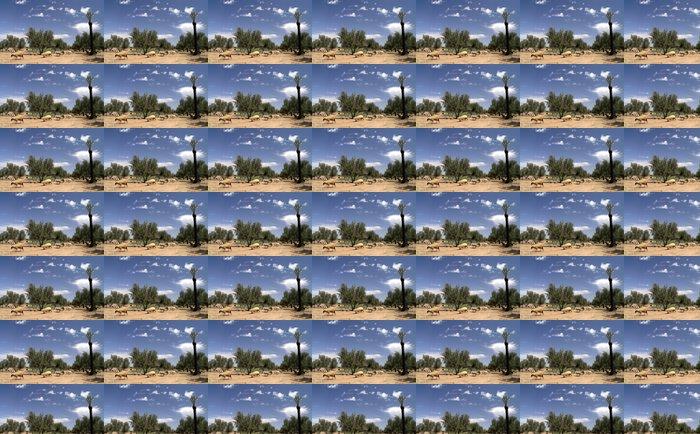 Vinylová Tapeta Moutons marocains - Prázdniny