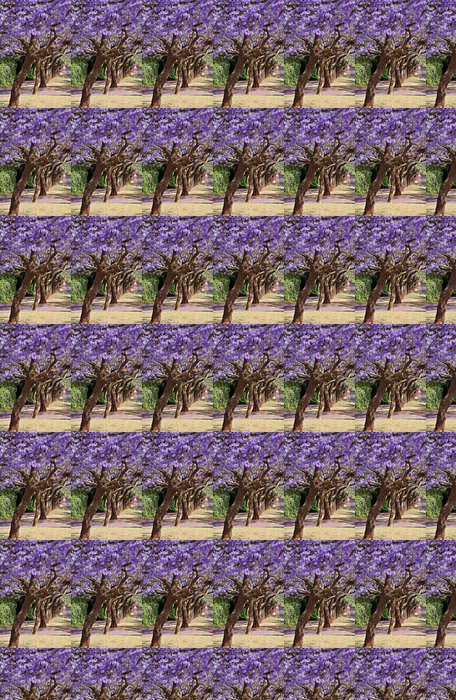 Vinylová Tapeta Jacaranda stromy - Afrika