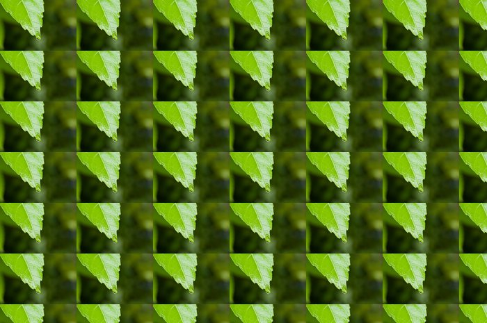 Vinylová Tapeta Drop a čerstvé zelené - Ekologie