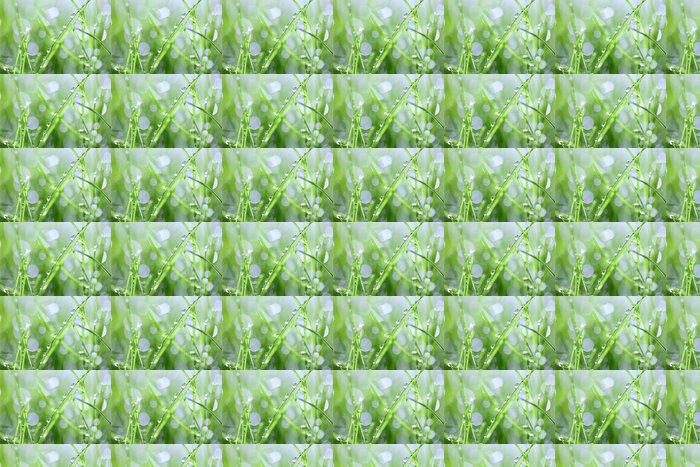 Vinylová Tapeta Zelená tráva s kapkami - Roční období