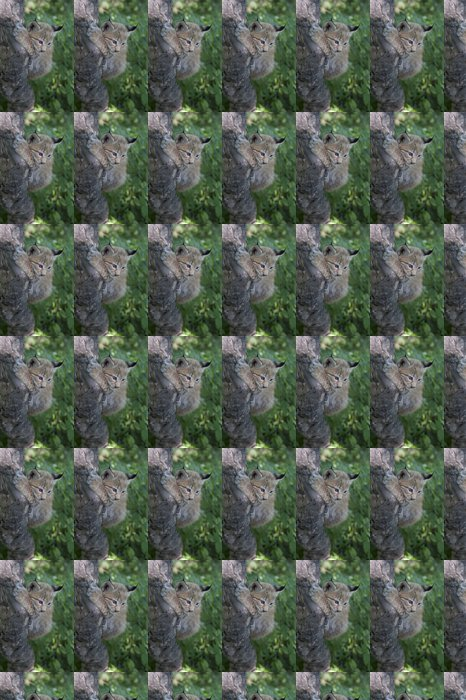 Vinylová Tapeta Rys, kotě rys, dítě lynx - Savci