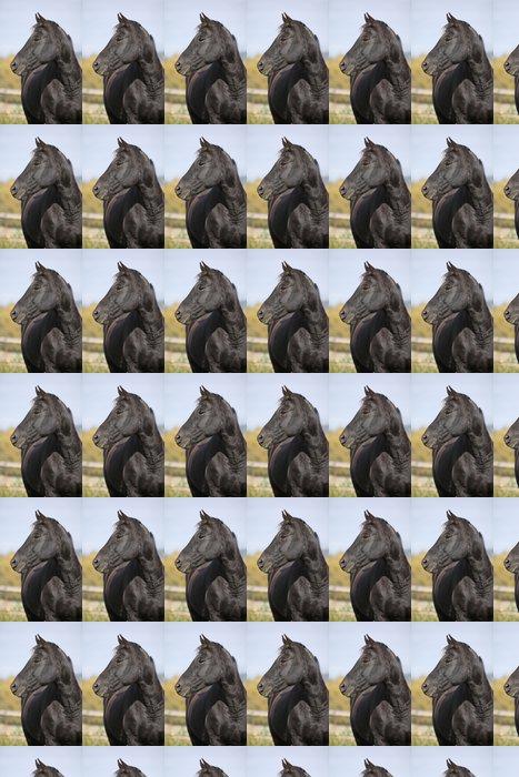 Vinyltapet Svart hest på pasture i høst - Pattedyr