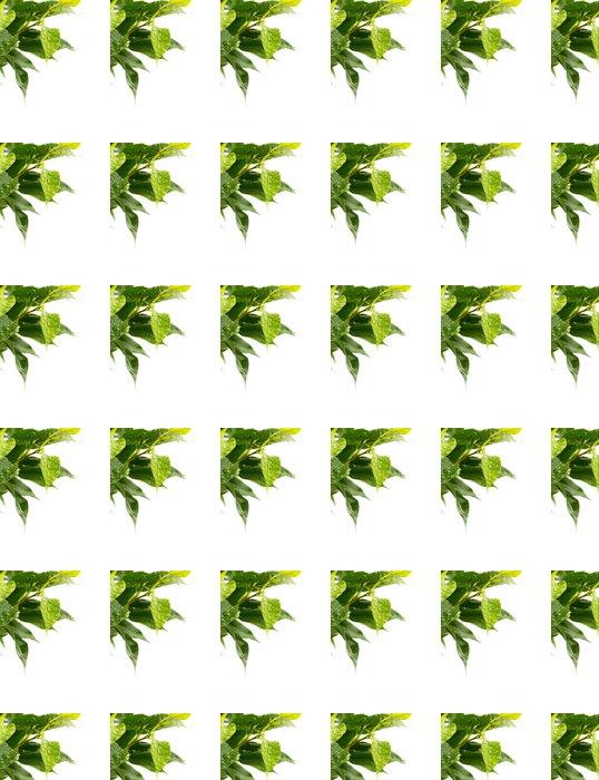 Vinylová Tapeta Zelené listy - Rostliny