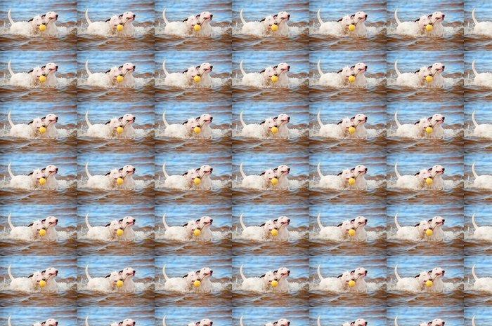 Vinylová Tapeta Dva bílí psi hrají s míčem v moři - Savci