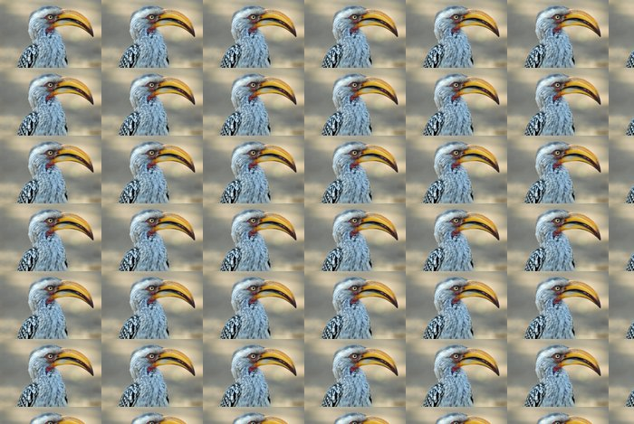 Vinylová Tapeta Calao-hornbill - Ptáci