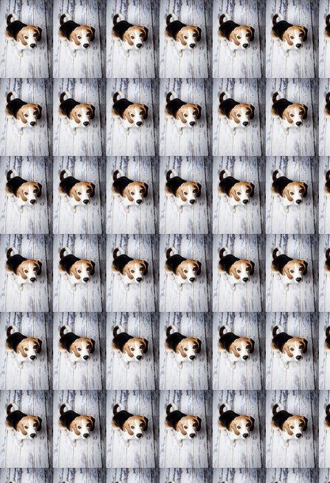 Vinylová Tapeta Roztomilý pes - Témata