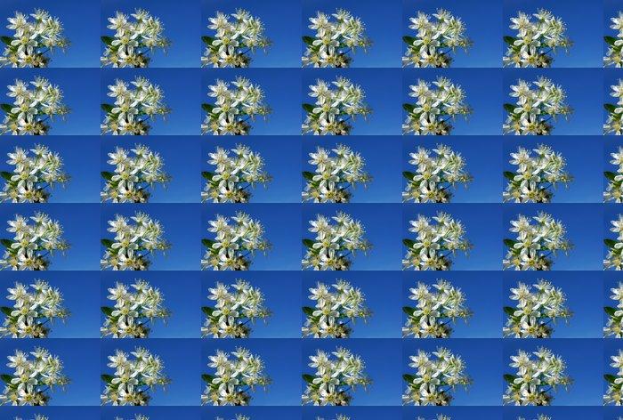 Vinylová Tapeta Kvetoucí třešeň na modré obloze - Květiny